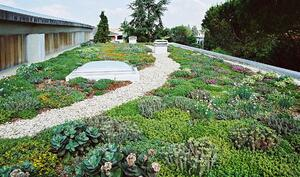 222_green roof-1